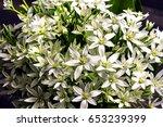 bouquet of white summer flowers   Shutterstock . vector #653239399