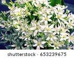 bouquet of white summer flowers   Shutterstock . vector #653239675