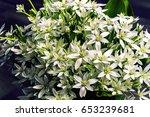 bouquet of white summer flowers   Shutterstock . vector #653239681