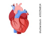 anatomical heart isolated.... | Shutterstock .eps vector #653256814