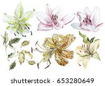 watercolor set with lily... | Shutterstock . vector #653280649