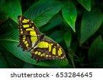 beautiful butterfly metamorpha... | Shutterstock . vector #653284645