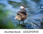 beautiful duck swims in the... | Shutterstock . vector #653293945