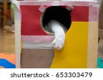 Stock photo cat playing in the cardboard box 653303479