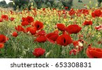 flowers red poppies blossom on... | Shutterstock . vector #653308831