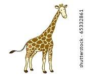 Giraffe On White Background....