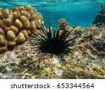 Sea Urchin Echinothrix Diadema  ...