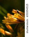 Small photo of Yellow Lilia