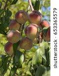 peaches | Shutterstock . vector #653365579