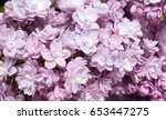 macro image of spring lilac... | Shutterstock . vector #653447275