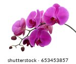 beautiful purple phalaenopsis...   Shutterstock . vector #653453857