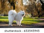 Samoyed Dog Standing In Park...
