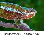 chameleon panther furcifer... | Shutterstock . vector #653577739