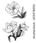 white tropical exotic flower... | Shutterstock . vector #653578054