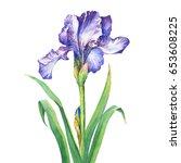 the branch flowering violet... | Shutterstock . vector #653608225