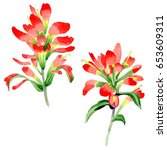 wildflower indian paintbrush...   Shutterstock . vector #653609311