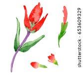 wildflower indian paintbrush...   Shutterstock . vector #653609329