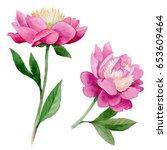 wildflower peony flower in a... | Shutterstock . vector #653609464