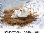 Pair White Swans Resting On Dr...
