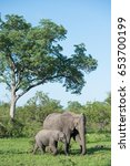 Small photo of A mother African elephant and her calf in beautiful front light.