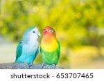 Blue And Green Lovebird Parrot...