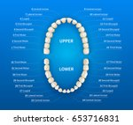 adult human mouth with tooth... | Shutterstock .eps vector #653716831