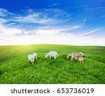 Goats Pasture Green Grass...
