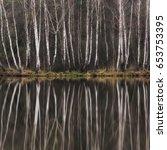 smooth birch tree forest water... | Shutterstock . vector #653753395
