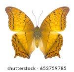 Small photo of Cruiser (vindula evota) butterfly, Danaus Genutia , monarch butterfly isolated on white background