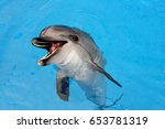 dolphin   Shutterstock . vector #653781319