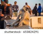 A Monkey Among People