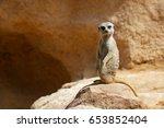 Meerkat In A Zoo. Animal...