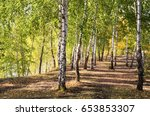 birch trees in the autumn forest | Shutterstock . vector #653853307