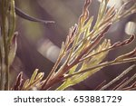 close up of leaves | Shutterstock . vector #653881729