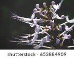 purple flowers | Shutterstock . vector #653884909