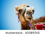 Head Of The Camel With Open...