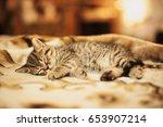 Stock photo kitten is sleeping on soft blanket 653907214