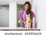 veterinarian doctor is making a ... | Shutterstock . vector #653956624