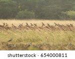impala herd running through the ... | Shutterstock . vector #654000811