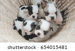 french bulldog puppies | Shutterstock . vector #654015481