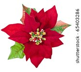 Red Christmas Flower Isolated...