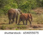 Small photo of African savannah elephant mother with her child at a waterhole at the Hluhluwe iMfolozi Park in South Africa