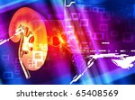 digital illustration of  kidney ... | Shutterstock . vector #65408569