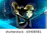digital illustration  of pelvic ... | Shutterstock . vector #65408581