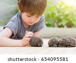 little boy playing with hedgehog | Shutterstock . vector #654095581