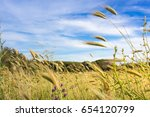 countryside wheat field in a... | Shutterstock . vector #654120799