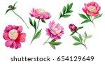 wildflower peony flower in a...   Shutterstock . vector #654129649