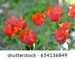red tulips | Shutterstock . vector #654136849