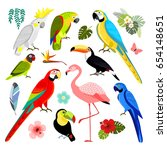 set of tropical exotic birds ... | Shutterstock .eps vector #654148651