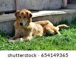 a brown long hair dog | Shutterstock . vector #654149365